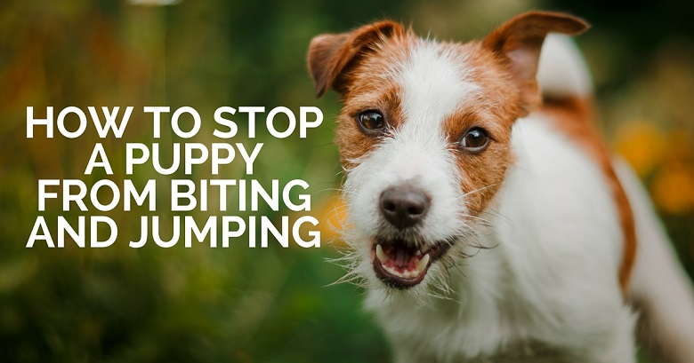 How To Stop Dog From Biting